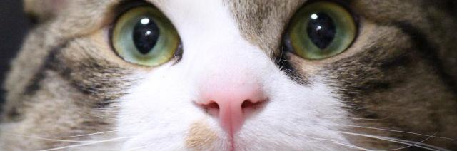 なぜ猫は噛むのか・・・猫の気持ちから知る