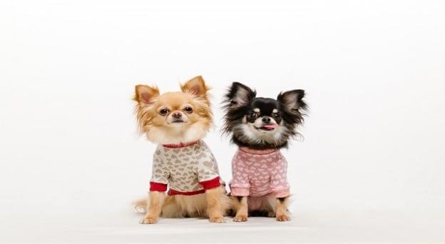 愛犬用の衣類やタオルの洗濯方法について