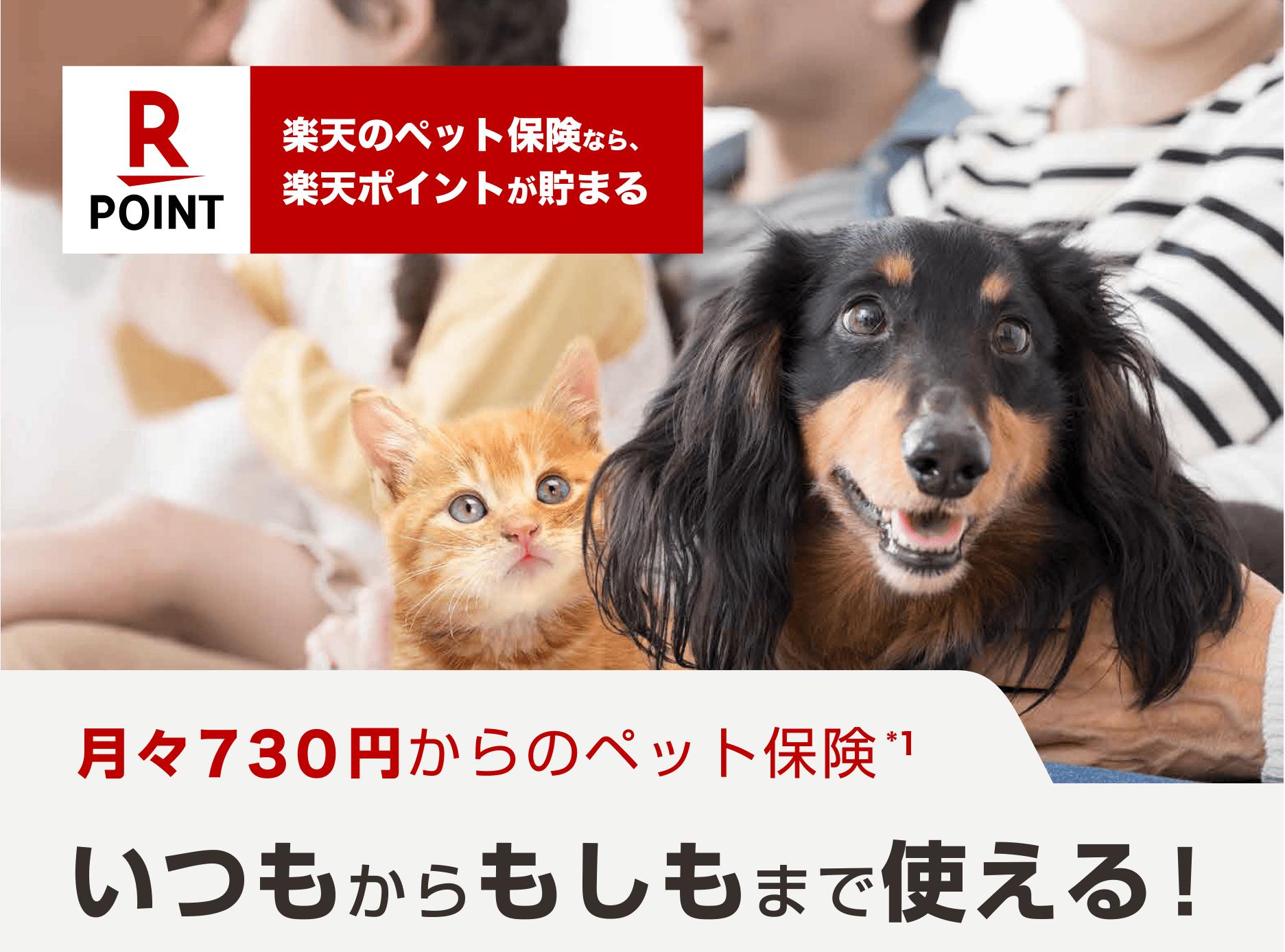 保険 ネコ の 生命